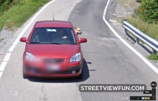 dog-out-window-car