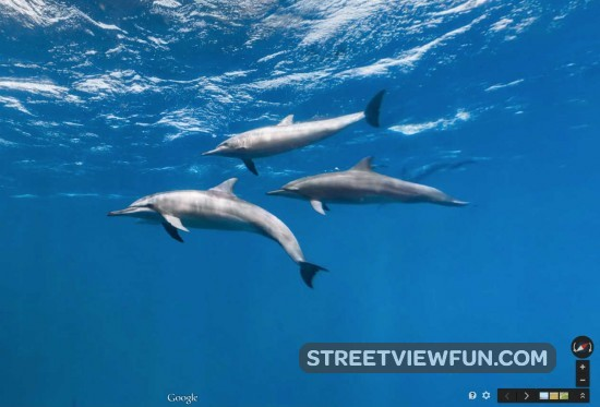 swim-with-dolphins-google-street-view