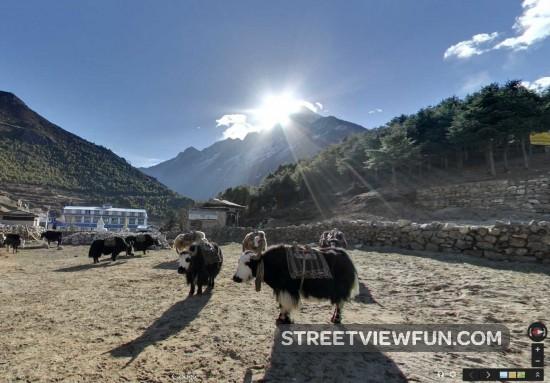 yak-parking-lot