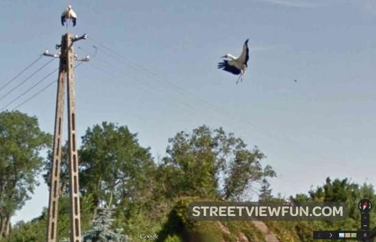 landing-stork