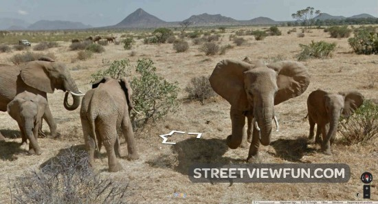 elephants-kenya-street-view