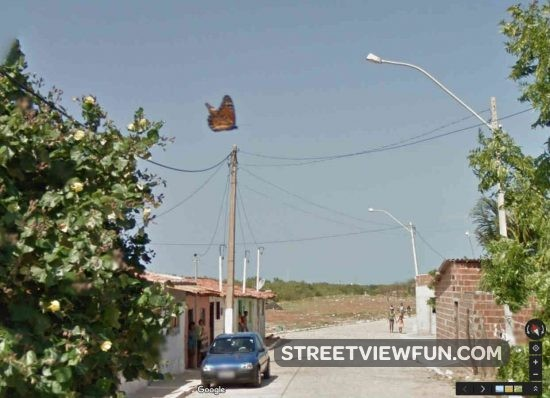 butterfly-google-street-view