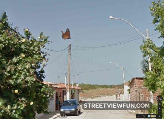butterfly-google-street-view