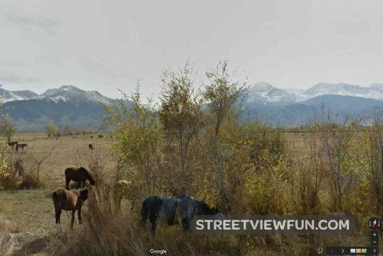horses-in-kyrgyzstan