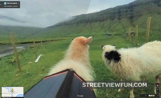 faroe-islands-sheep-view