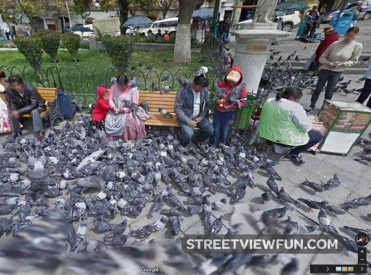 pigeon-plague