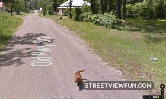 dog-chasing-google1