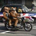 bears on a bike